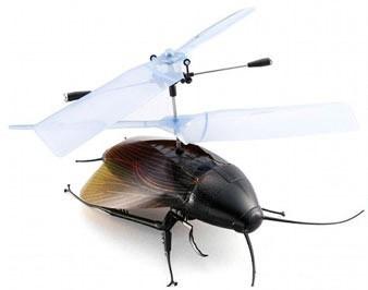flyingcockroach